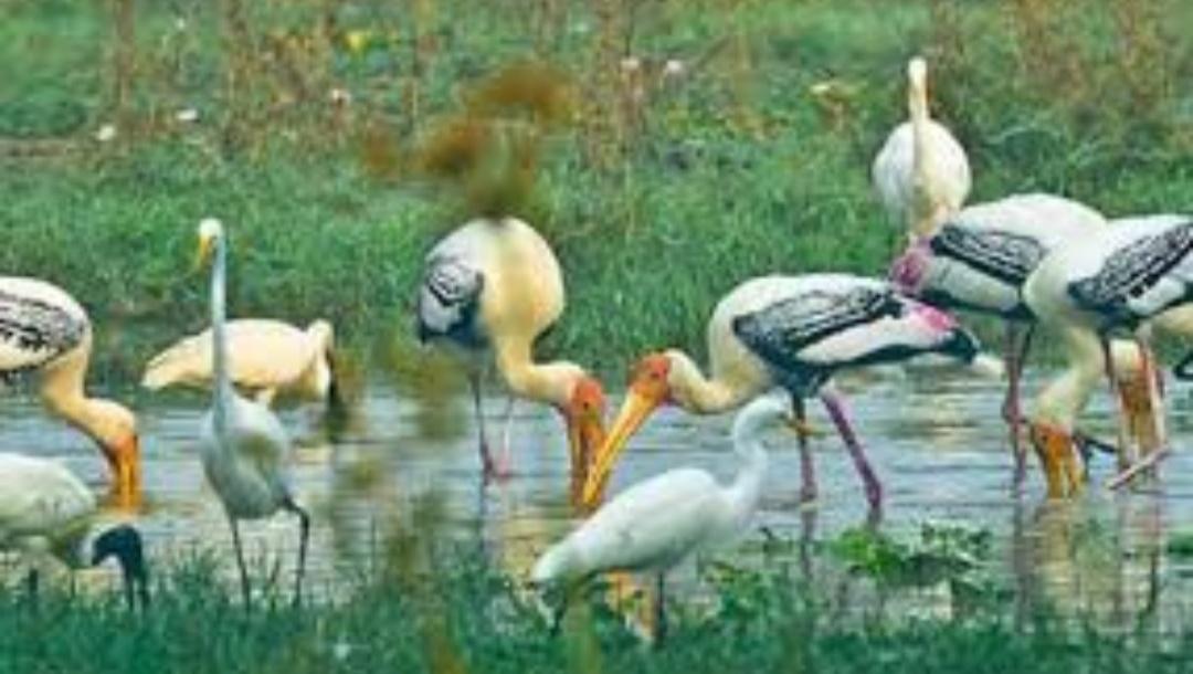 विदेशी पक्षियों का स्वर्ग देखना होतो चले आये केवलादेव पक्षी राष्ट्रीय उद्यान