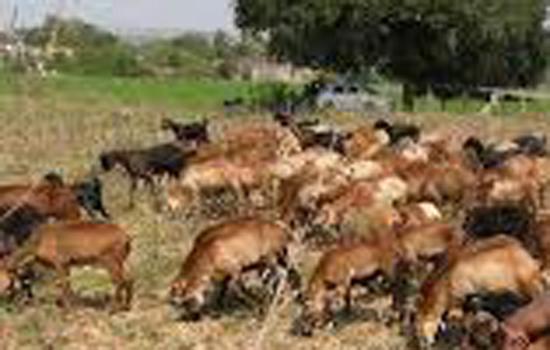 पशु पालकों को लघु व सीमांत किसानों में बांटकर गायों को मौत के मुह में नही धकेले