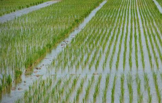 किसानों के लिए बनेगा माल