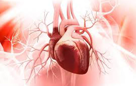 24 घंटे से अधिक समय तक सहेज कर रखे जा सकेंगे मानव हृदय