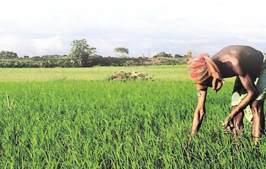 भारतीय कृषि उत्पादों की मांग बढ़ सकती है