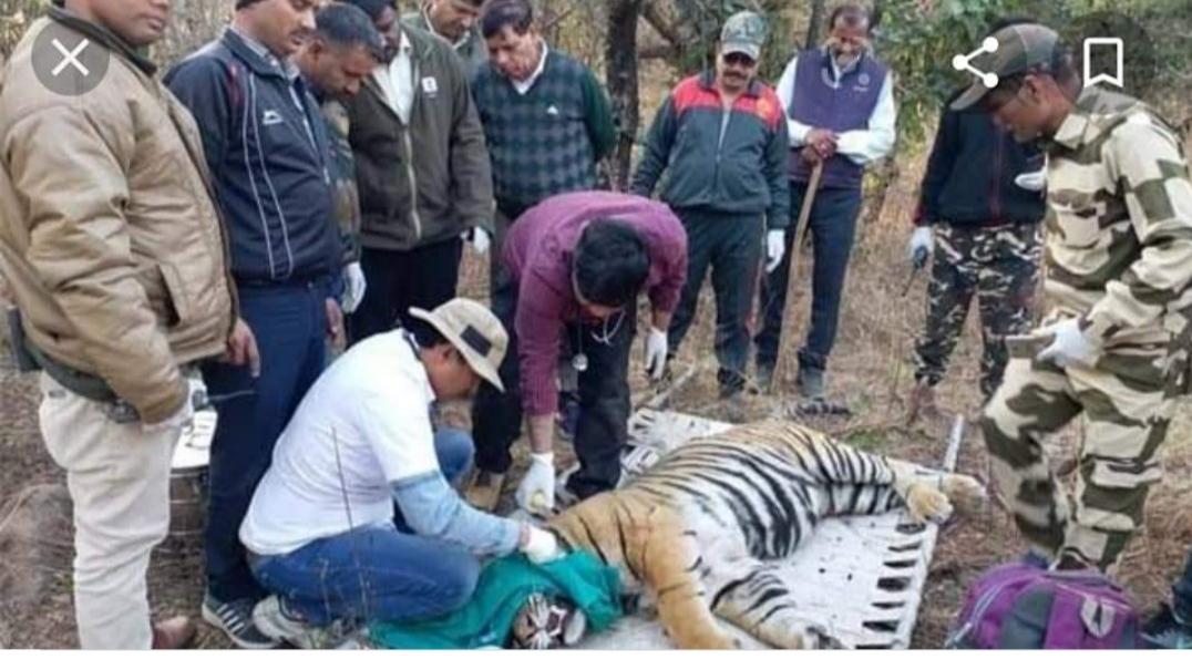मुकन्दरा टाइगर रिजर्व में बाघिन एमटी-2 की मौत, वन्यजीव प्रेमियों को लगा आघात