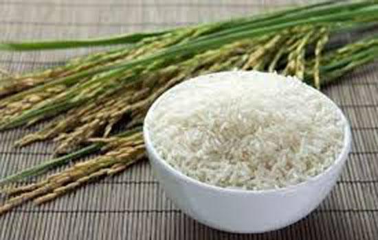 चालू सीजन में सरकार पांच करोड़ टन चावल खरीदेगी