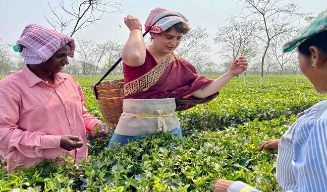 माथे पर टोकरी रख प्रियंका ने तोड़ीं चाय की पत्तियां, बागान के मजदूरों से भी की मुलाकात