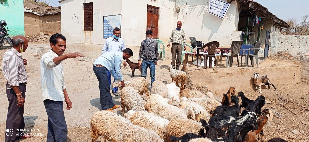 समाधान परियोजना जावर क्लस्टर में 9297 पशुओं का हुआ इलाज