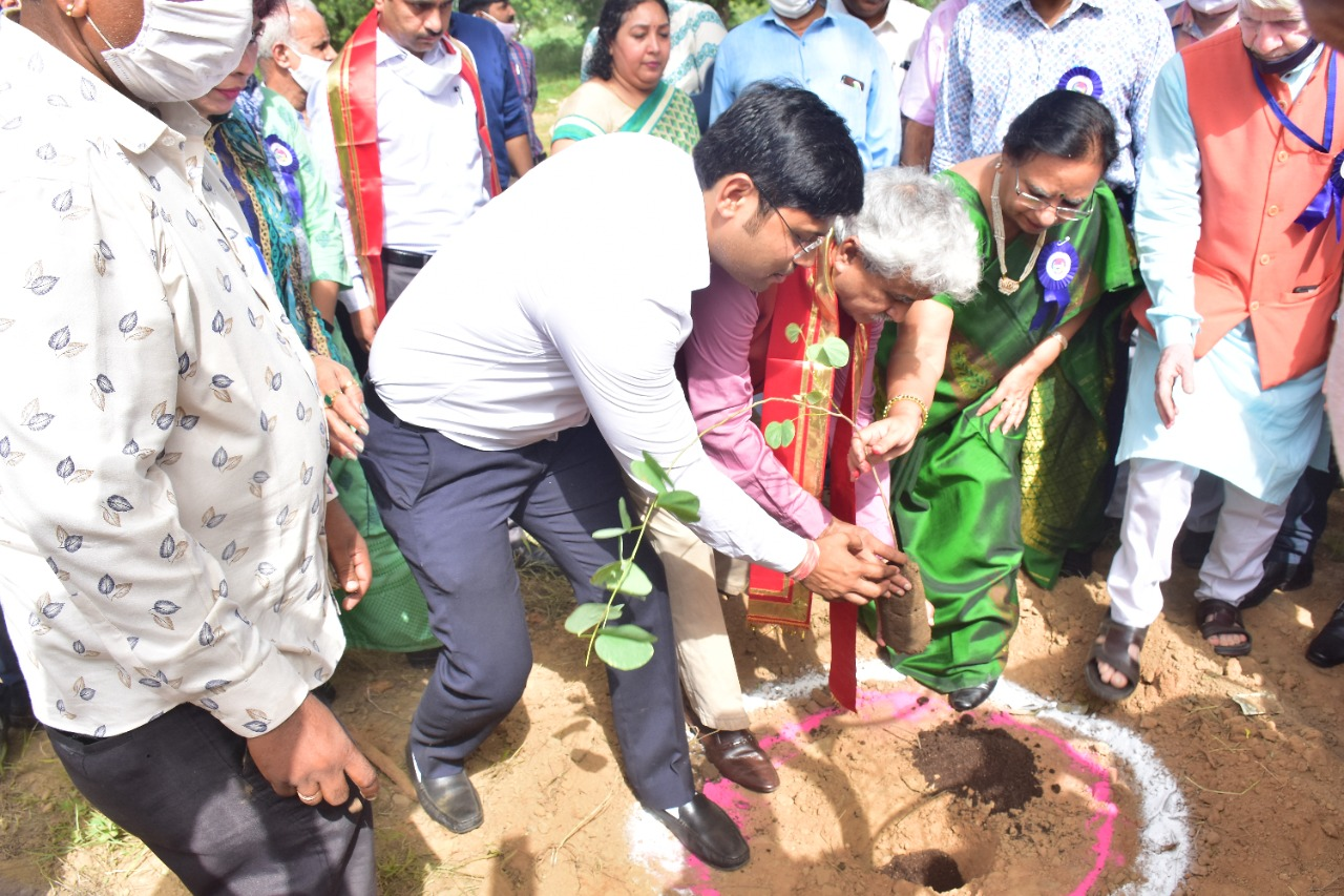 The enthusiasm showed in intensive Plantation